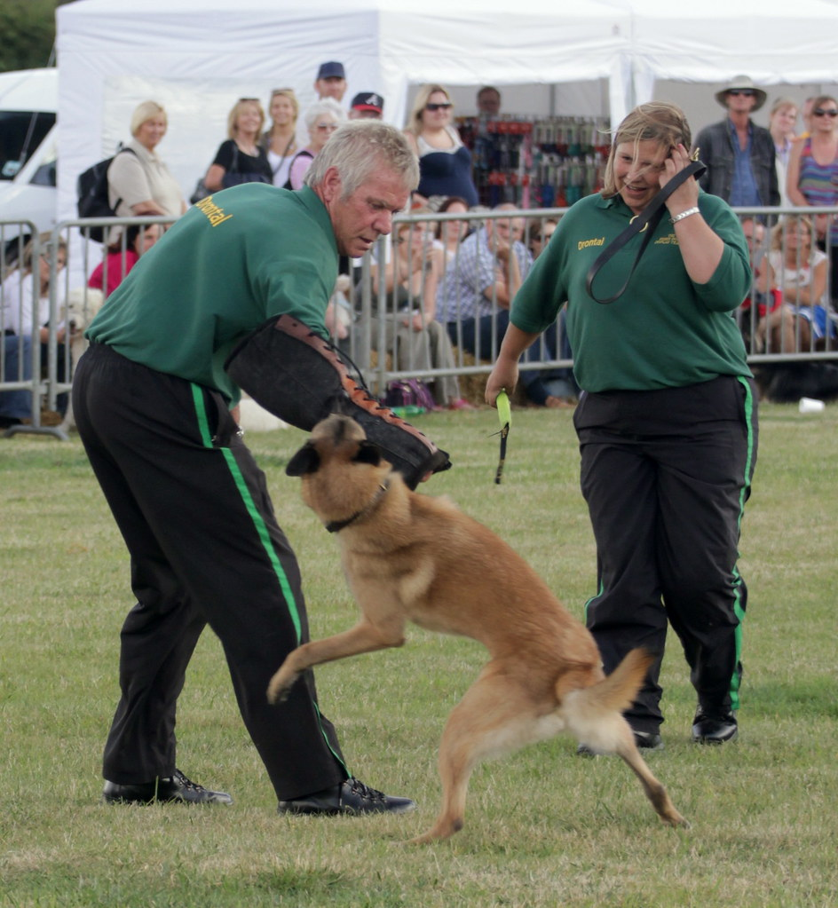 Hatfield Peverel Dog Show