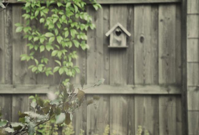 fågelbo