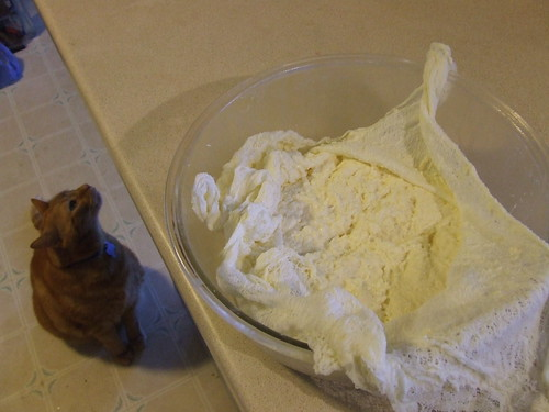 Ricotta Making - with cat