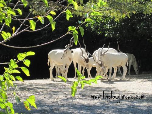 Saint Louis Zoo I