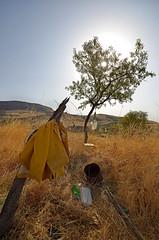 Madonie - Copyright  Pino Grasso (Pino Grasso photography) Tags: landscape petralia pino paesaggio madonie grasso