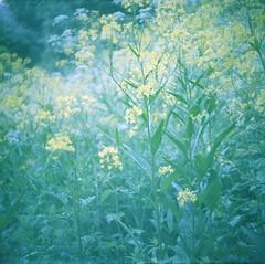 Plant Power (©skarson) Tags: camera plant flower oslo norway norge kodak russia lubitel2 lubitel portra 120mm tøyen kodakportra400 hasle canoncanoscan9000f