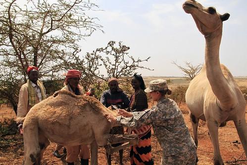 Camel care