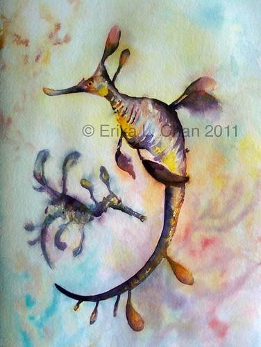 weedy sea dragons 2011