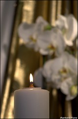 Nonna Nuna (Barbara Fi@re) Tags: nikon orchidee candela luce nonna oro nuna vivaforever quindiciannisenzaletuecarezzemisonopesati