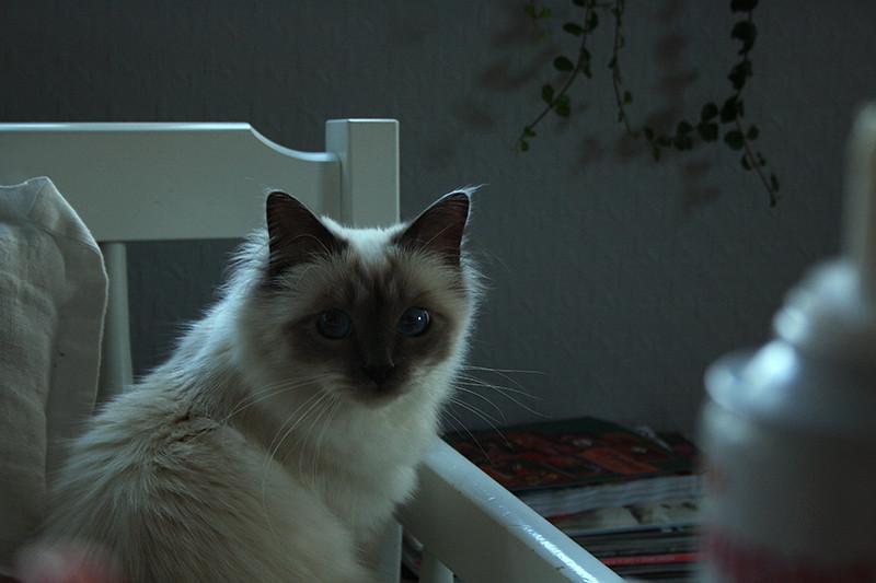 fina katten