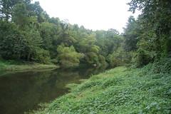 Green Reedy River