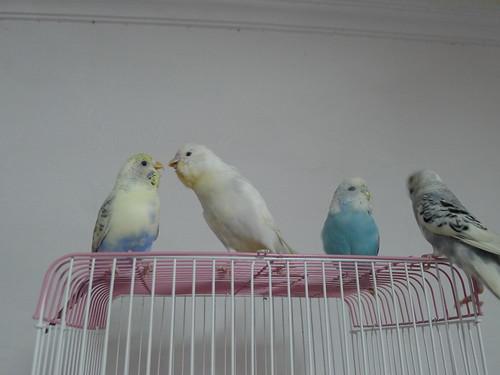 從左至右-妹依、小雪、Nico與小P