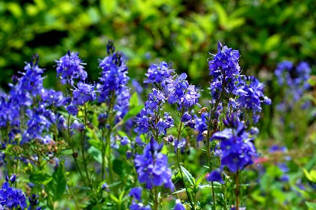 Flowers, Alpena