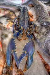 They say; Red as a lobster. I wonder why (klaash63) Tags: fish photographer sony noordzee northsea alfa lobster alpha vis kreeft hdr hdri denhelder fotograaf heiligenberg photomatix a700 tonemapping visserijdagen klaasheiligenberg klaash63 klaash