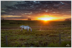 Evening in the Pasture (Artvet) Tags:
