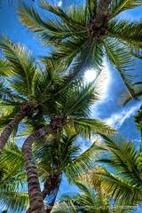 Palme, sole... (Riccardo Maria Mantero) Tags: ocean travel sea mexico island mare caribbean rivieramaya isla viaggio hdr oceano islamujeres mex isola messico caraibi viaggiare mantero riccardomantero riccardomariamantero ljsilver71