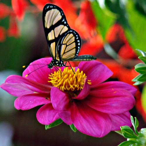 quando virou borboleta by Fred Matos