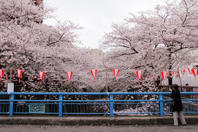 110409_162451_目黒川_桜