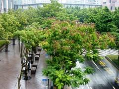 201108231330 - TW.TPE - Taipei 101 (60) (Stevenvision) Tags: tour 101 taipei   highest  haut gratteciel skyscarper xinyi taipeitaiwan
