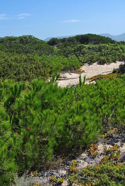 Sardinia - Baia delle mimose