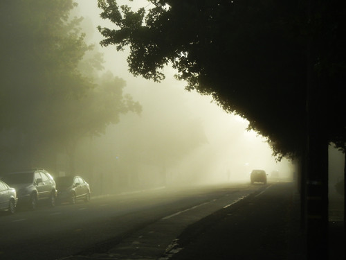 Morning Fog 4729 _ Mod _ 500
