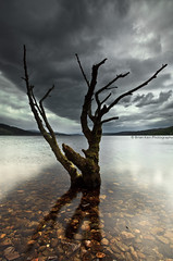 Loch Rannoch Tree (.Brian Kerr Photography.) Tags: sky mountains tree clouds canon landscape scotland highlands rocks scottish loch kinloch lochrannoch rannoch scottishhighlands eos5dmkii briankerrphotography