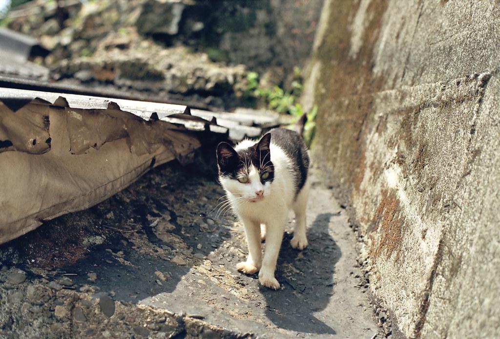me super到猴峒貓村訪貓