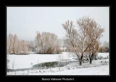 BVF171210-2597 (Bianca Valkenier PhotoArt) Tags: winter sneeuw nederland natuur winters landschap kou koud gelderland sneeuwvlokken dodewaard betuwe seizoen winterlandschap sfeervol winterweer sneeuwoverlast