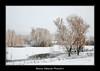 BVF171210-2597 (Bianca Valkenier Photography) Tags: winter sneeuw nederland natuur winters landschap kou koud gelderland sneeuwvlokken dodewaard betuwe seizoen winterlandschap sfeervol winterweer sneeuwoverlast