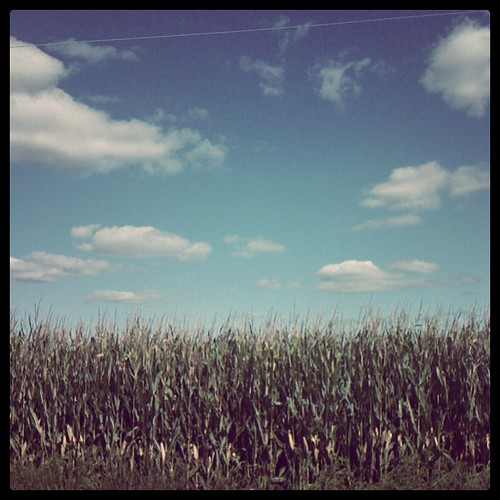 The corn was tall, the sky was blue, the clouds were white