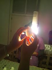 タマゴを光に透かすと文字が-横浜トリエンナーレ2011の写真