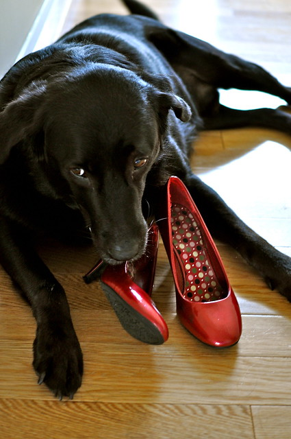 A Dog in High Heels