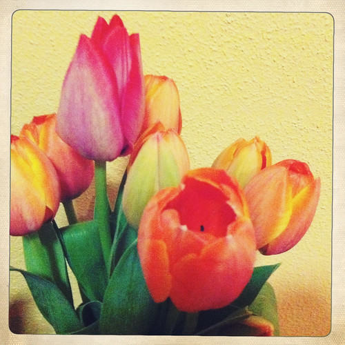 Tulips. Day 284/365.