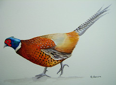 Pheasant Watercolour Painting (serene04) Tags: game bird art painting pheasant watercolour