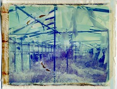 Inhabited Devastation [Explored] (lyconaut) Tags: abandoned film toxic analog polaroid decay lofi greenhouse crete messy land instant expired 340 packfilm iduv lcnt