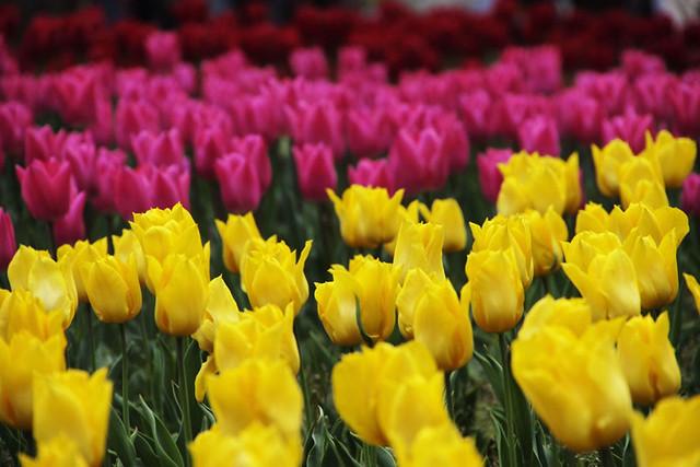 110417_145530_横浜_花と緑のスプリングフェア2011