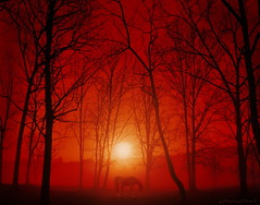 (NataThe3) Tags: trees sky horse sun nature fog forest sunrise catchycolors colorful dusk thegalaxy flickrsfinestimages1