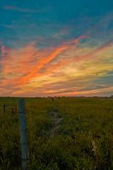 Rainbow Trail (Andepes) Tags: canada grass rainbow trail saskatchewan grassland
