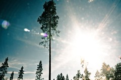Blinded by the light (E y e V i s i o n) Tags: wood light sky sun tree nature sunshine silhouette pine forest estonia ray shine blind bright flare straight eesti photocontesttnc12