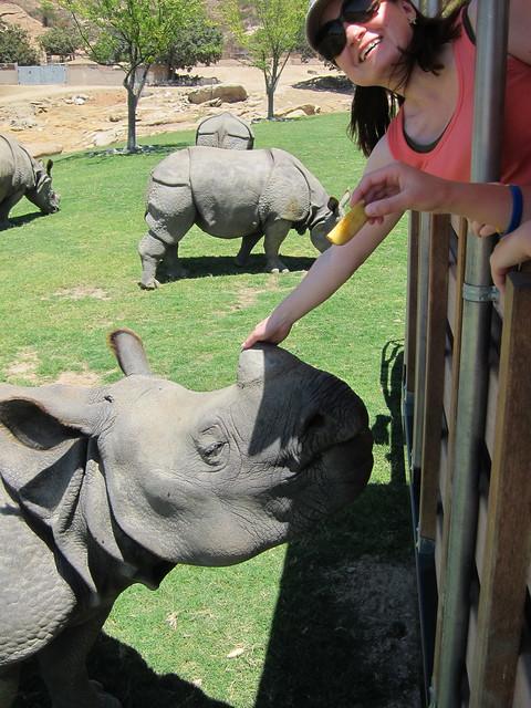 Rhino Feeding - San Diego