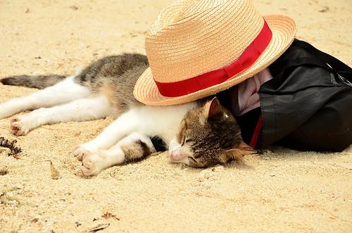 フリー写真素材, 動物, 哺乳類, 猫・ネコ, 寝顔・寝ている,