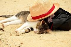 [フリー画像] 動物, 哺乳類, 猫・ネコ, 寝顔・寝ている, 201108172300