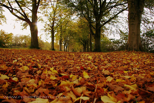 Autumn Leaves at Farnham Park