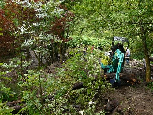 Nettoyage bois mort 28.07.11 Sentier Chaise 2 004
