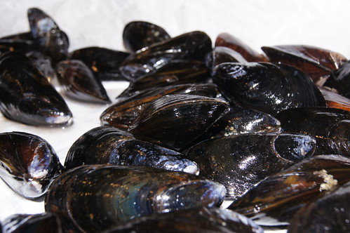PreCooked Mussels