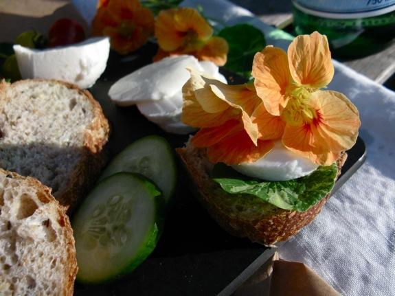 mainland nasturtium picnic 003