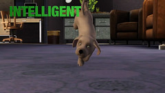 screen-sims-3-pets-pitomci_39_20110816_1484275098