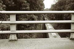 97310012 (Jinette Lopez) Tags: sign basketball train woods pitbull trail highfive