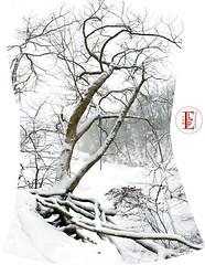 Green Rope (Kansas Poetry (Patrick)) Tags: snow cold frozen lawrencekansas quarrylake whenits90youcantremembercold patrickbringsrosestonancy