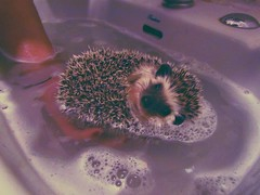 this place we live is not where we belong. () Tags: mine hedgehog inlove