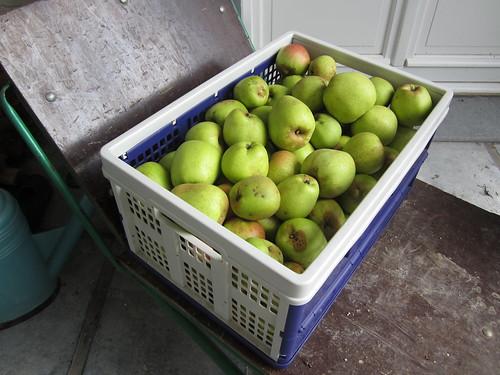 Oh, un bac de pommes!