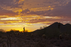 Saguaro sunset (doveoggi) Tags: sunset arizona landscape scottsdale 9256 the4elements mcdowellsonoranpreserve bestcapturesaoi