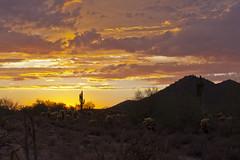 Saguaro sunset (doveoggi) Tags: sunset arizona landscape scottsdale 9256 the4elements mcdowellsonoranpreserve bestcapturesaoi