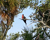 Day 231